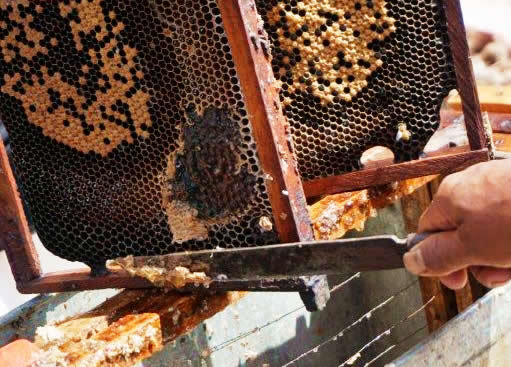 ネパール野生種ハチミツ