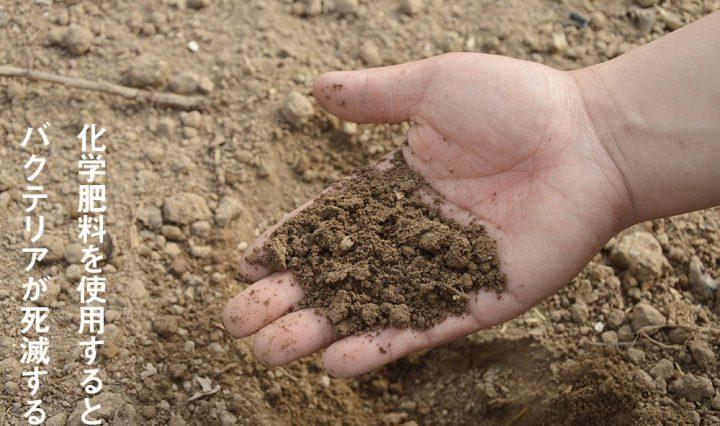 化学肥料でバクテリアは死滅する